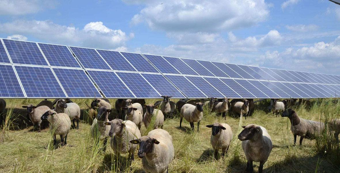 UmweltBank: Mein Geld macht grün